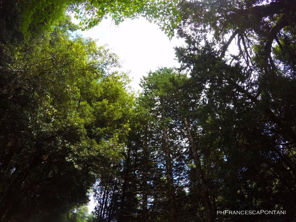cetona_toscana_area_archeologica_belverde-3