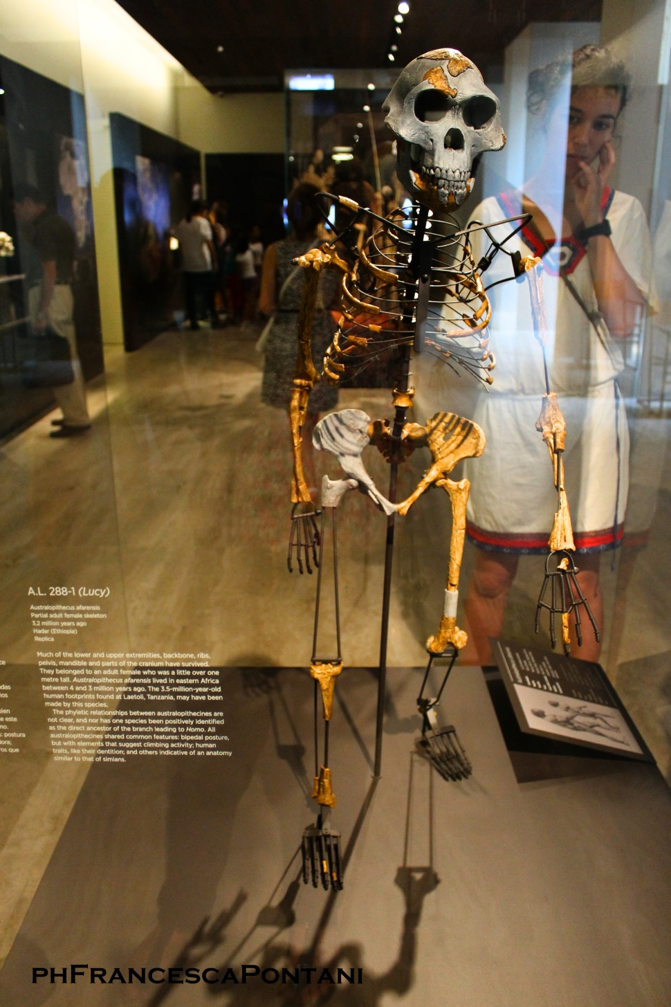 madrid_museo_archeologico_lucy_australopithecus_afarensis