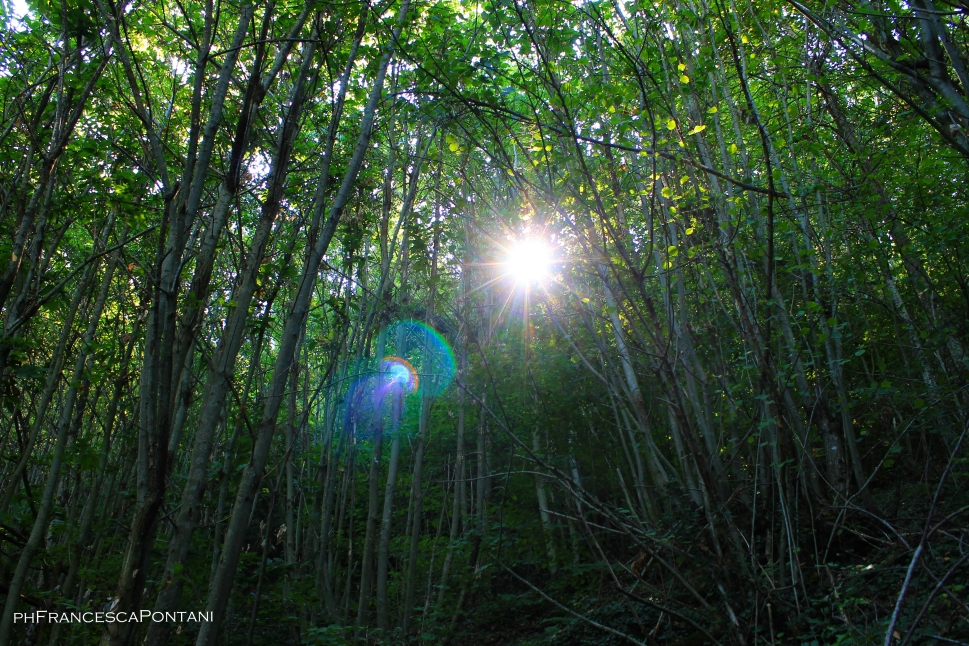 soriano_nel_cimino_bosco_didattico_alberi