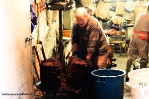 vitorchiano_produzione_del_vino