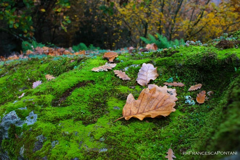 bomarzo_piramide_foglie_marroni_e_alberi_gialli