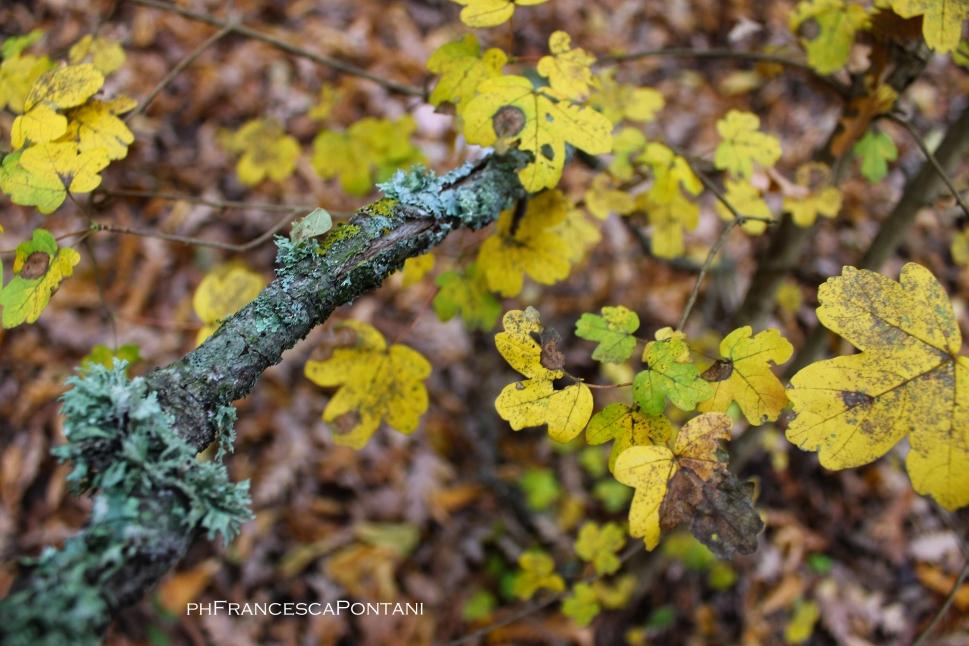 bomarzo_piramide_muschio_licheni_e_foglie_gialle