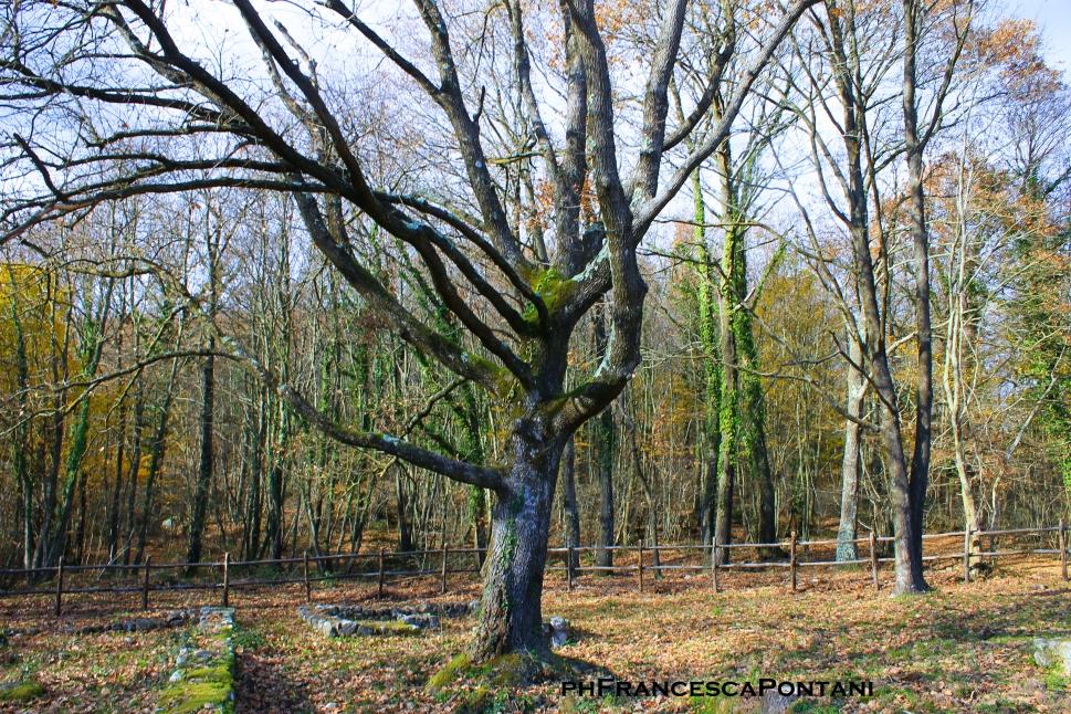 grasceta_deicavallati_tempio_etrusco_albero