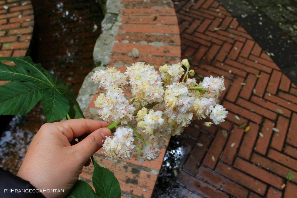 santu_lussurgiu_sardegna_fiori