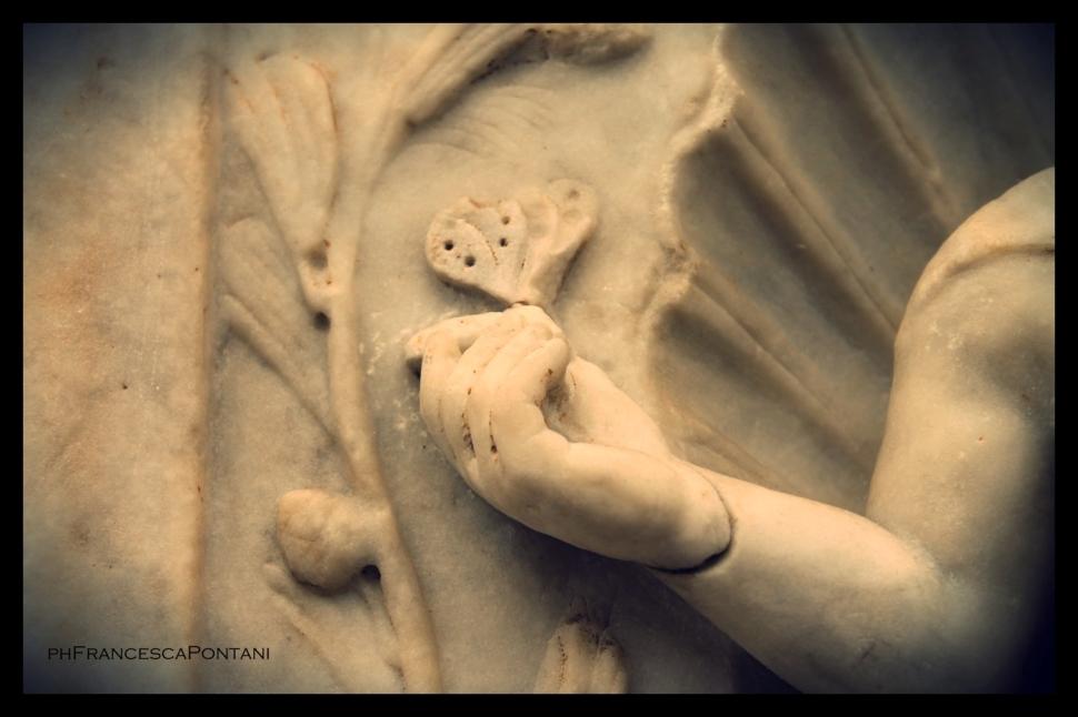 Farfalla_museo_delle_Terme_di_Diocleziano