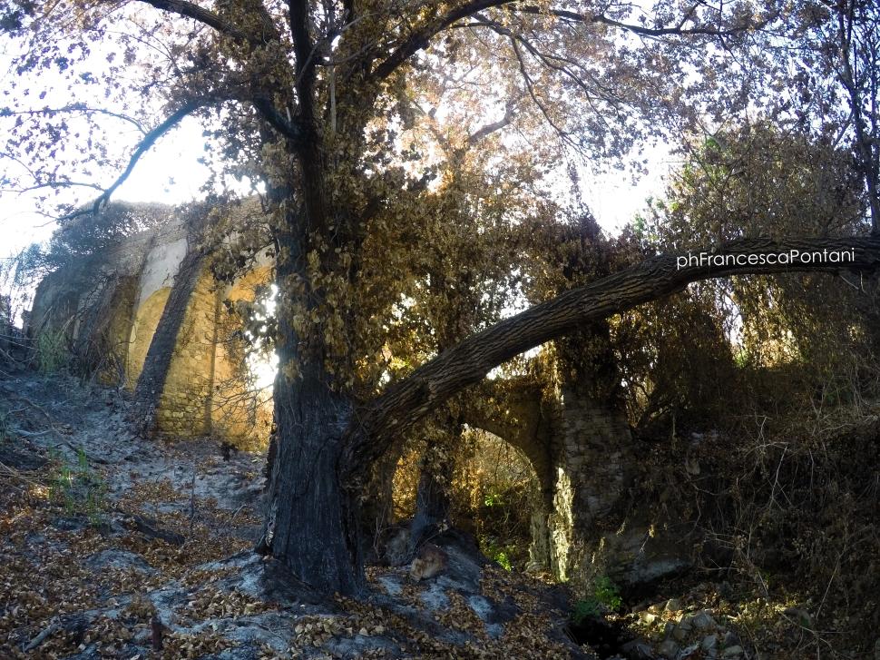 Civitavecchia_Acquedotto_di_Traiano_tra_gli_alberi