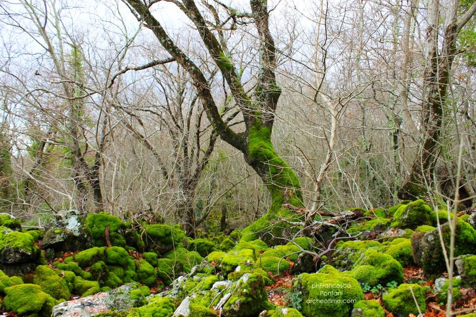 Rofalco-pietre-alberi-muschio-archeotime